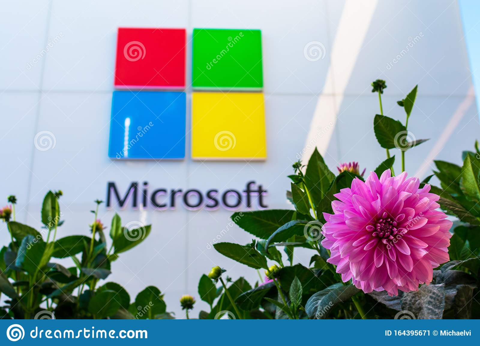 Blur Dahlia Flowers At Microsoft Store Editorial Photo Image Of