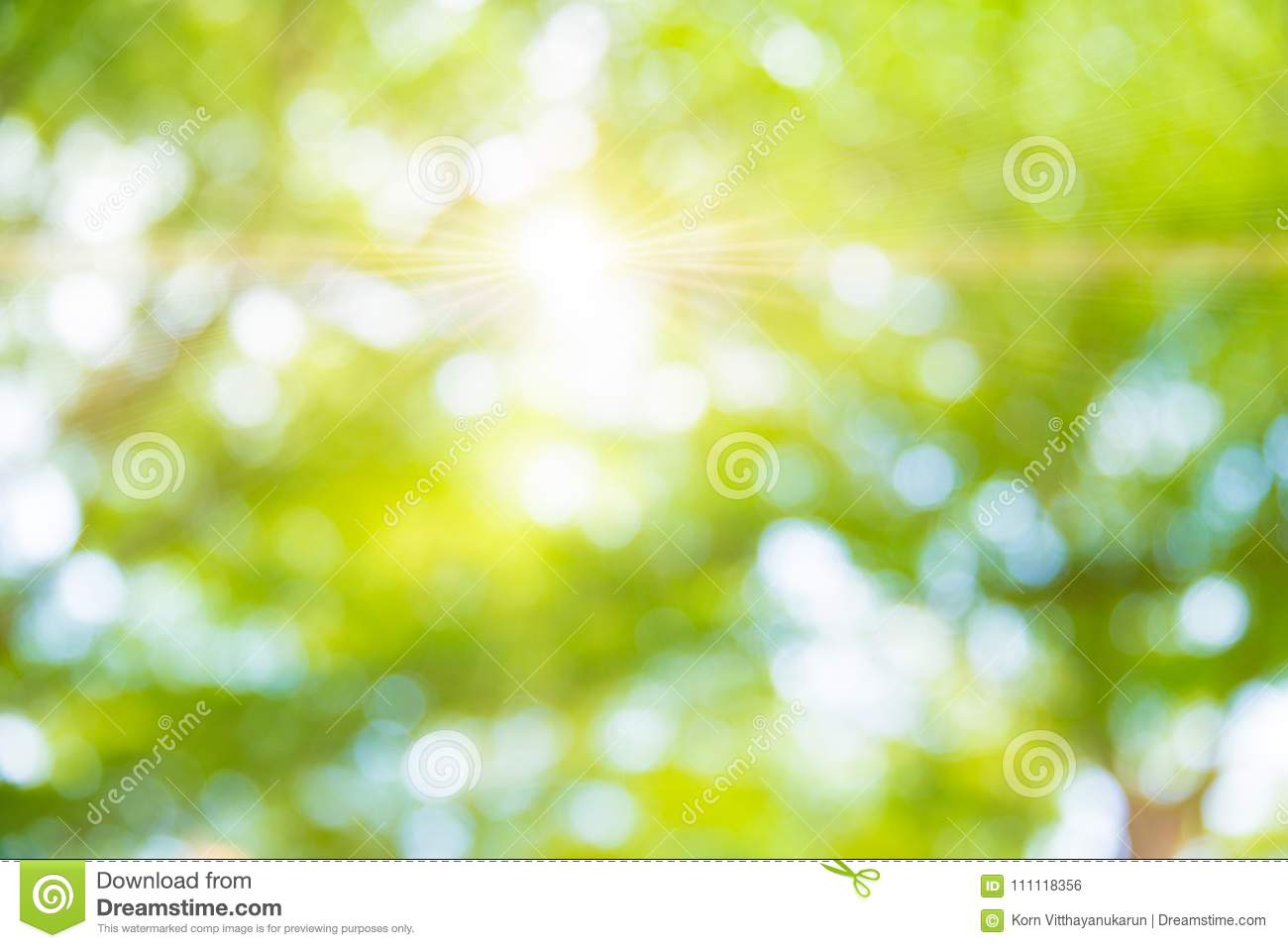 Blur Green Tree Background In Park Garden Stock Photo Image Of