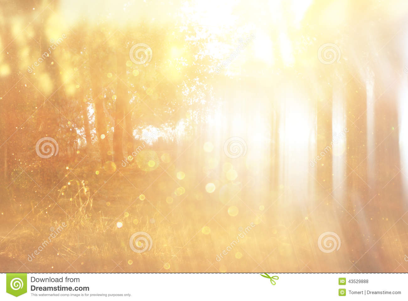 Blurred Abstract Photo Of Light Burst Among Trees And