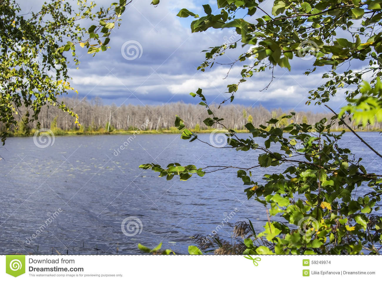 Blurred background forest lake framed yellowing leaves in cloudy weather