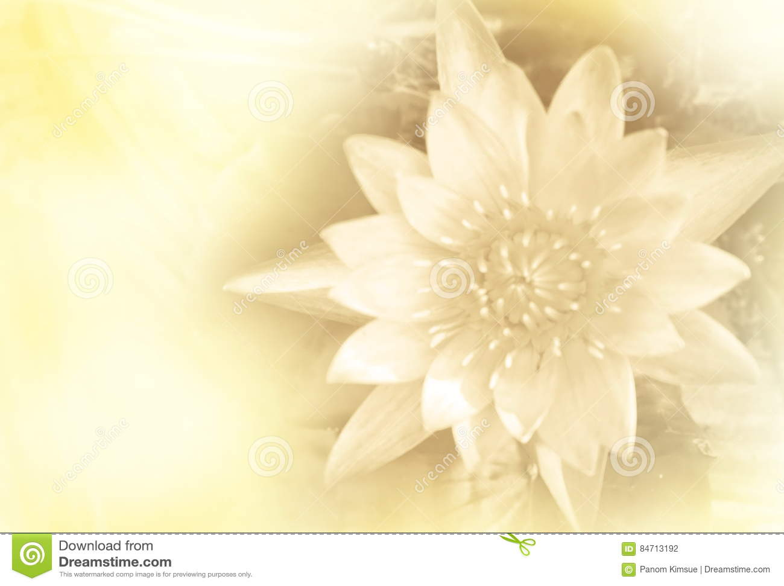 Flower Meanings Lotus Gallery Fresh Lotus Flowers