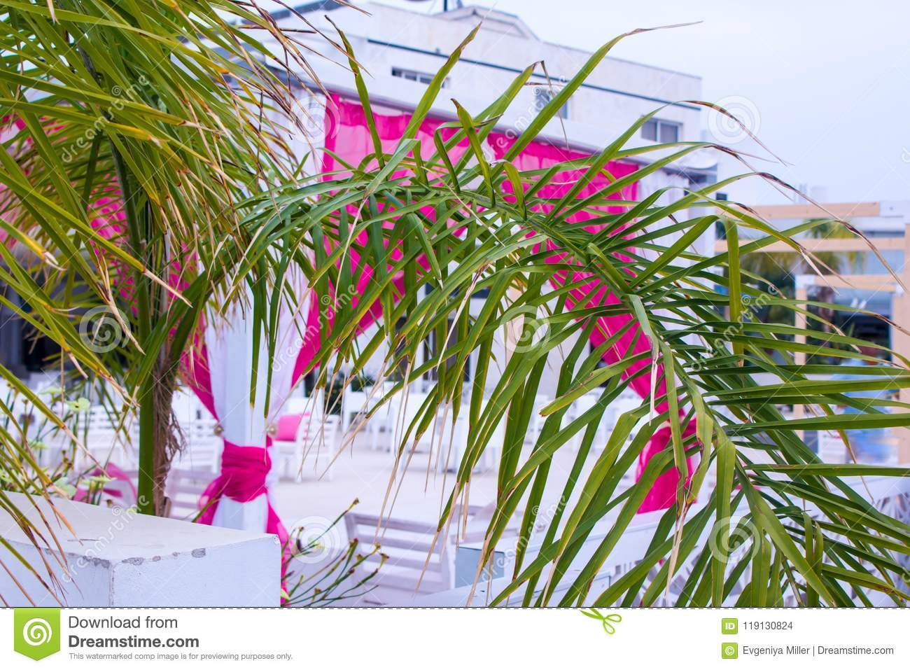 Blurred Background With Palms Stock Photo - Image of palmtrees ...