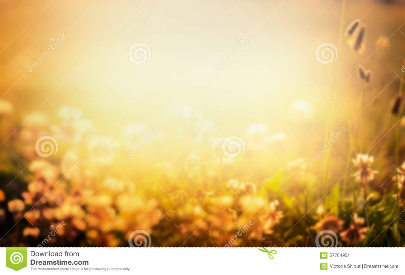 blurred outdoor backgrounds. Brilliant Outdoor Blurred Nature Background With Flowers And Sunset Light Throughout Outdoor Backgrounds O
