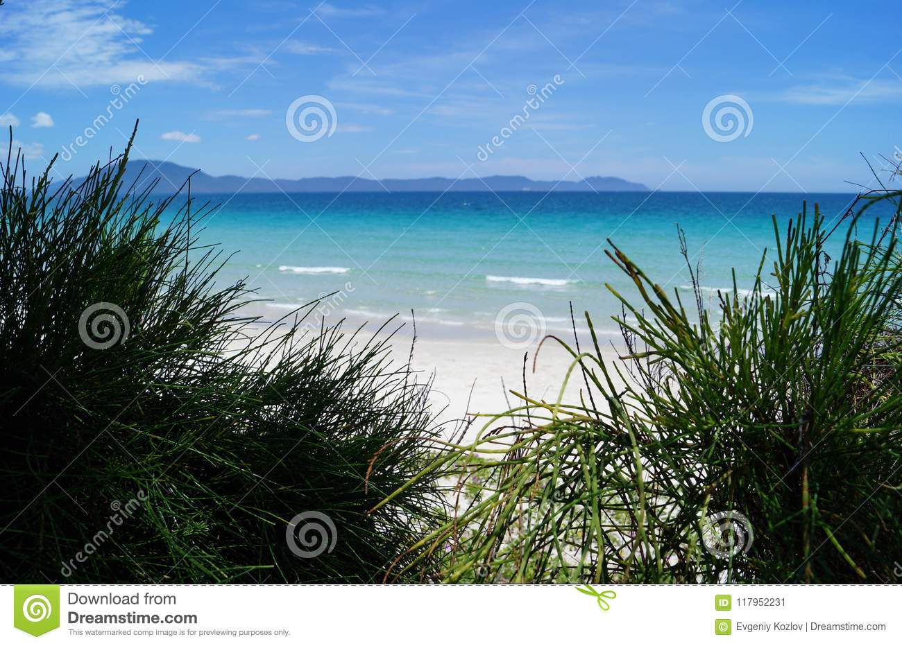 Blurred Sea View Through The Bushes Stock Image - Image of