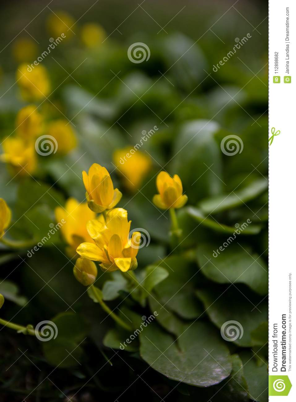 Blurred summer background with blooming calendula flowers, marigold. Beautiful Floral Wallpaper.