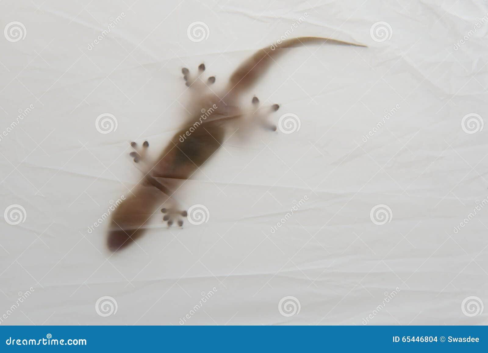 blurry house gecko. stock photo - image: 65446804