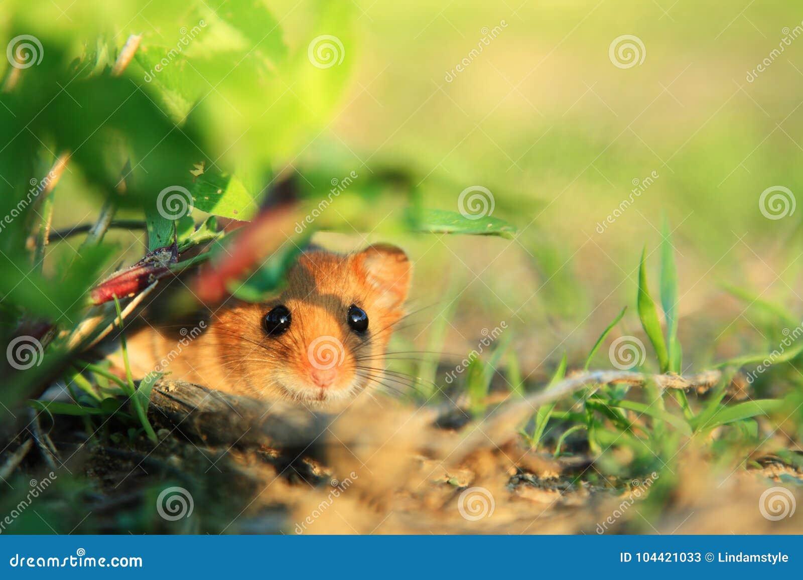 Blygt gulligt litet djur i natur
