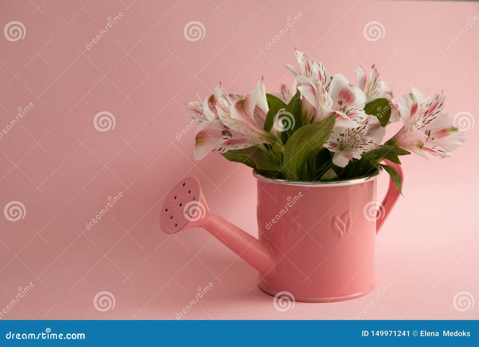 Boîte d arrosage rose vide et trois fleurs cramoisies de gerbera se trouvant diagonalement Trois fleurs rouges et une boîte d arr