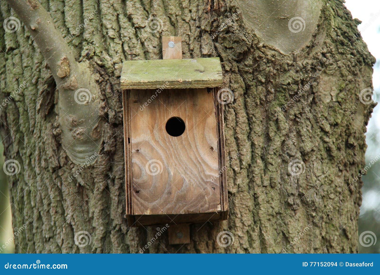 Boîte d oiseau en bois