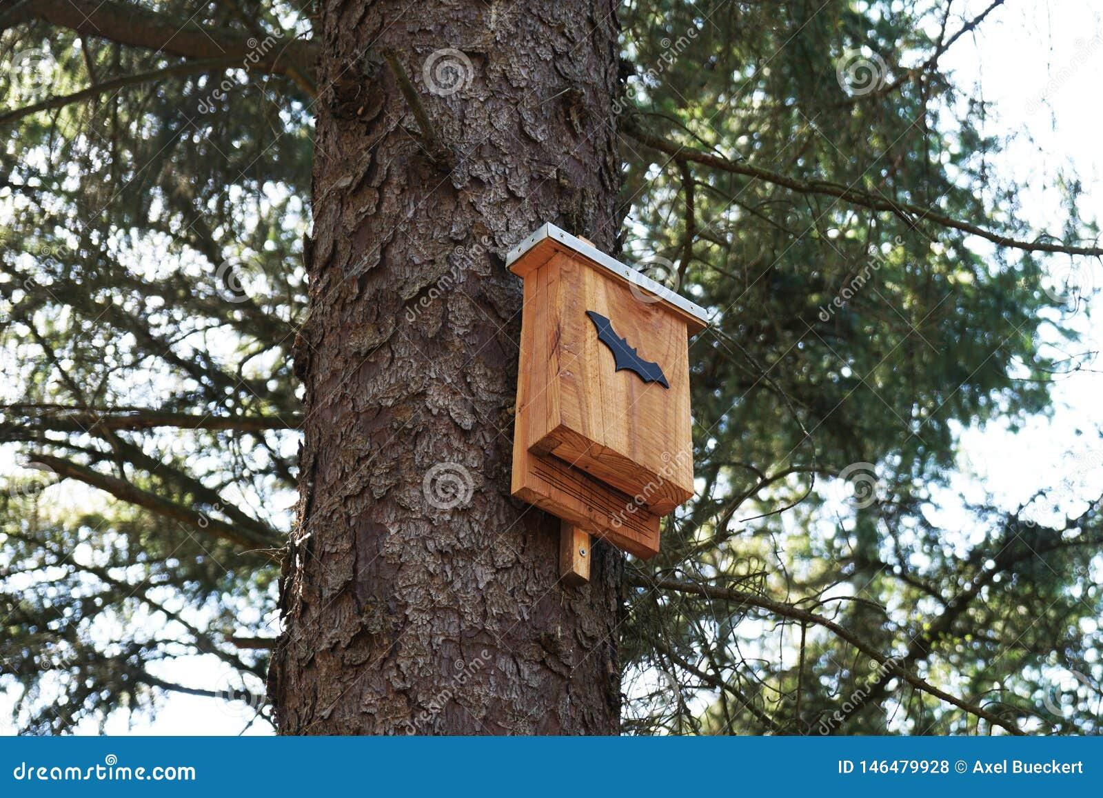 Boîte de batte dans l arbre