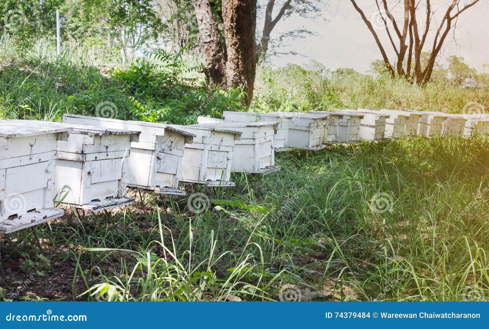 Boîte de ruche dans la ferme d abeille, boîte en bois pour le nid d abeille, ferme d abeille