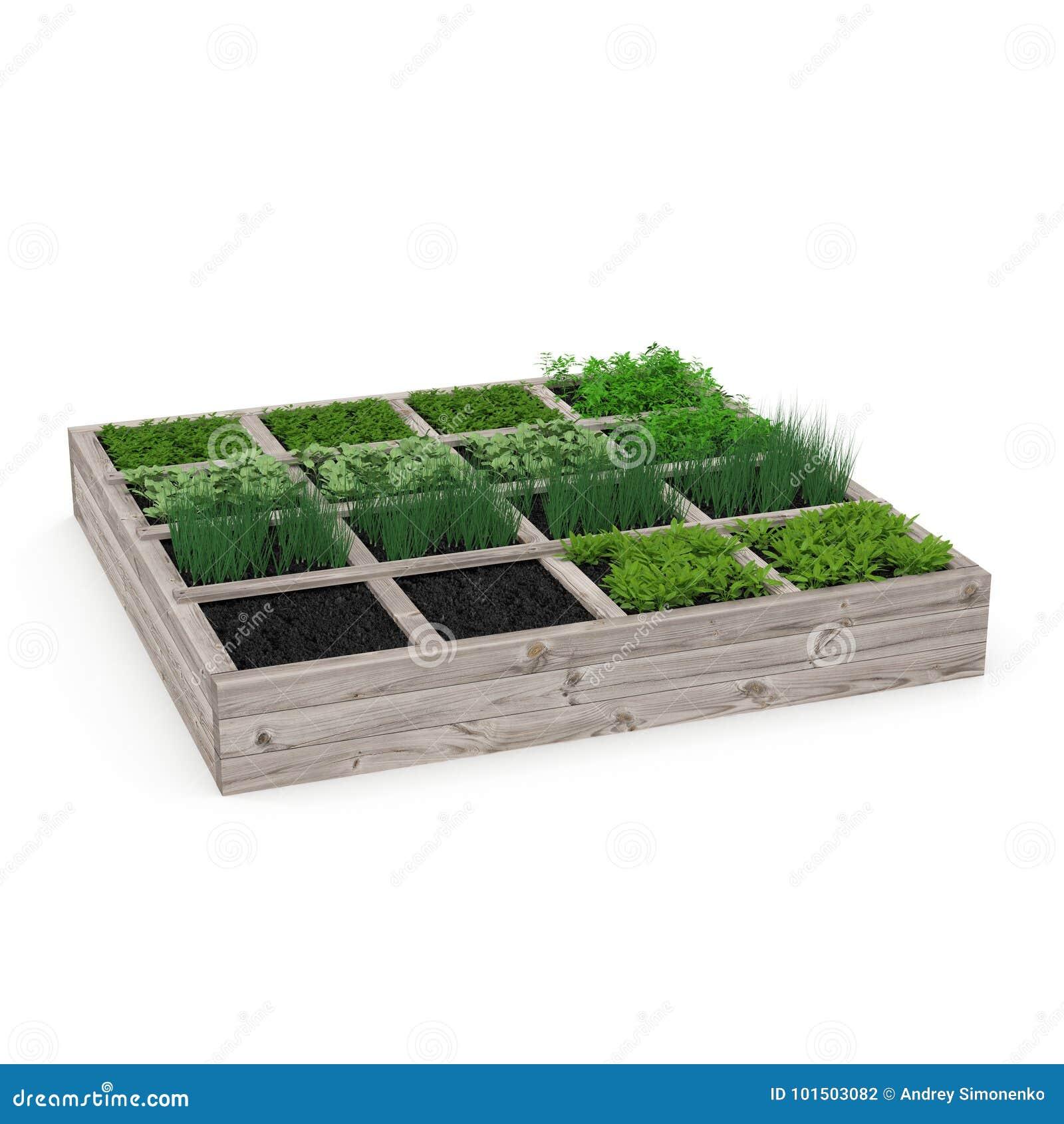 Boîte en bois avec un jeune jardin sur le blanc illustration 3D