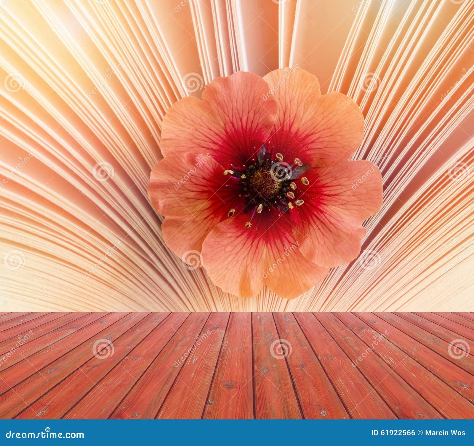 boîte en bois rouge vide avec la belle petite fleur à un arrière