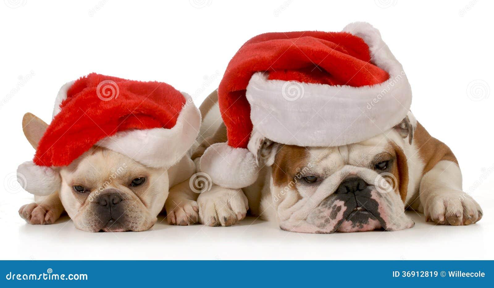 Boże Narodzenie psy