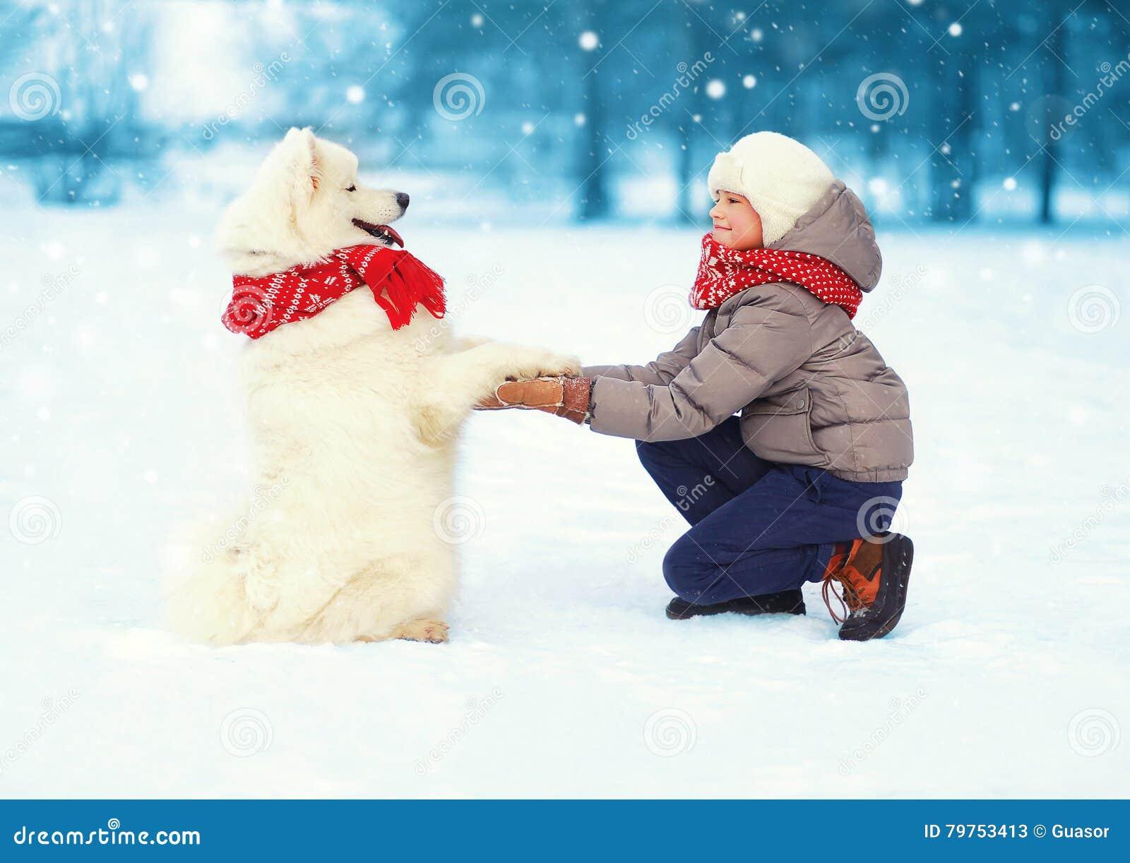 Bożenarodzeniowa szczęśliwa nastolatek chłopiec bawić się z białym Samoyed psem na śniegu w zima dniu, pozytywu pies daje łapy dz