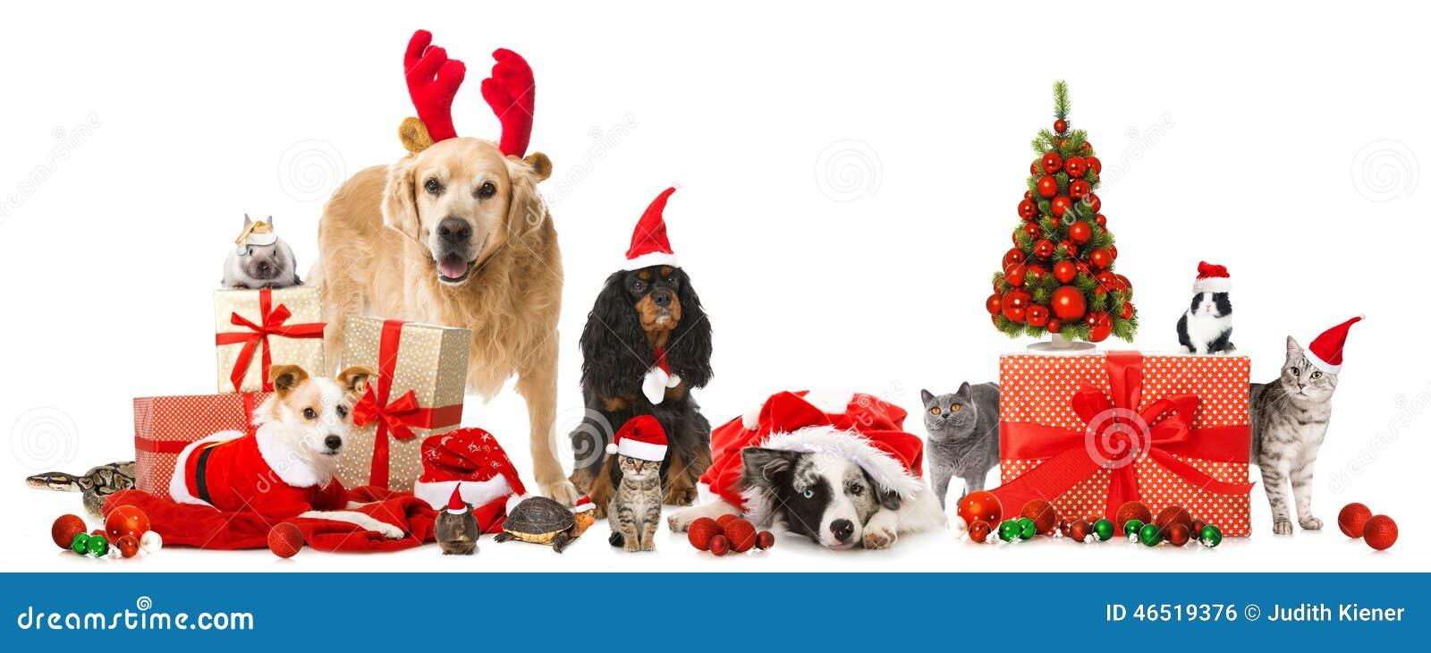 Bożych Narodzeń zwierzęta domowe