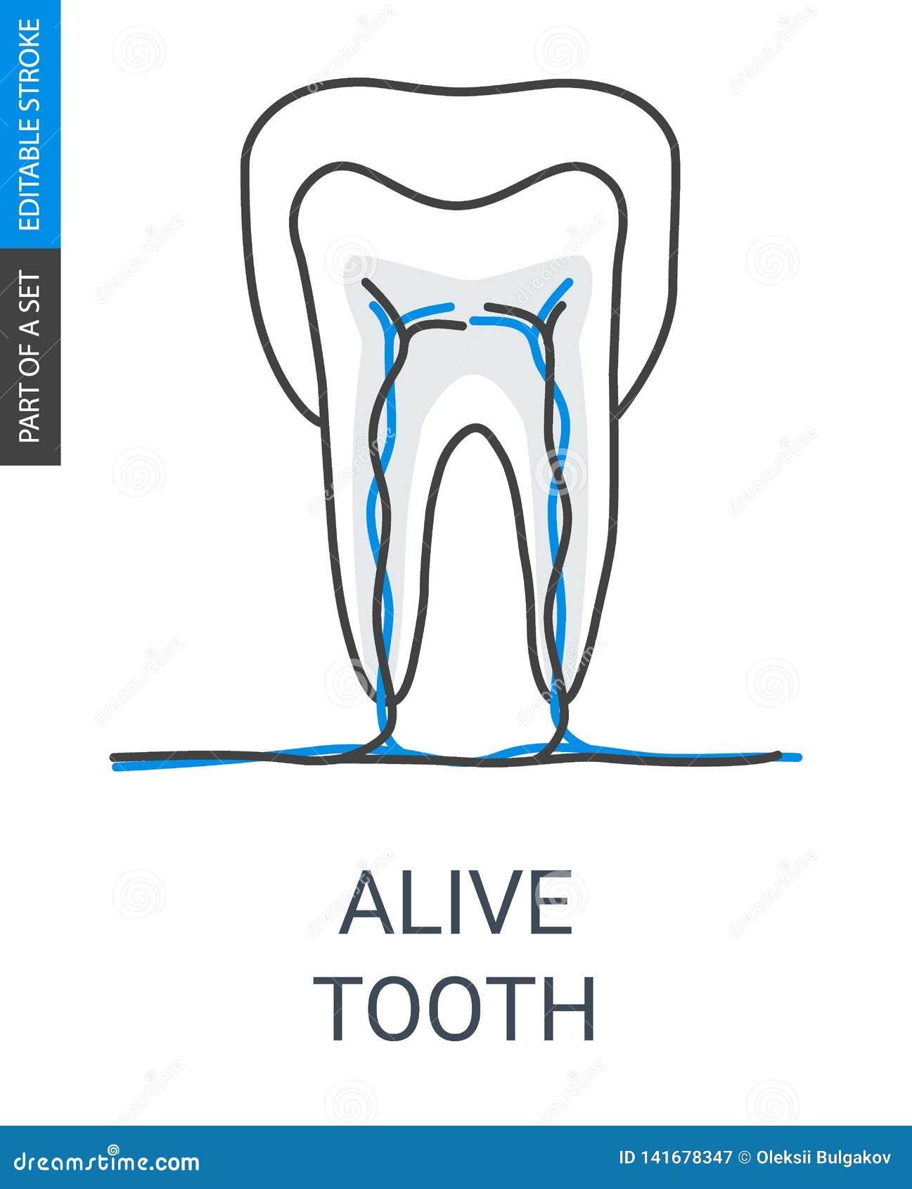 Bo tanden med skyttel- och ådersymbolen