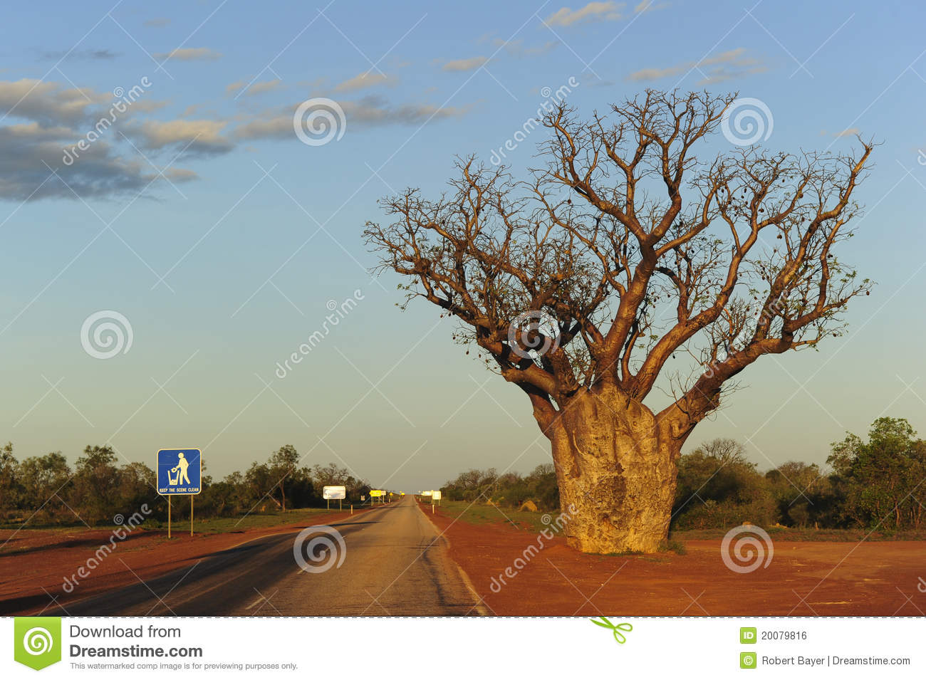 Boab tree western australia stock photo image 20079816 for Landscapers adelaide western suburbs