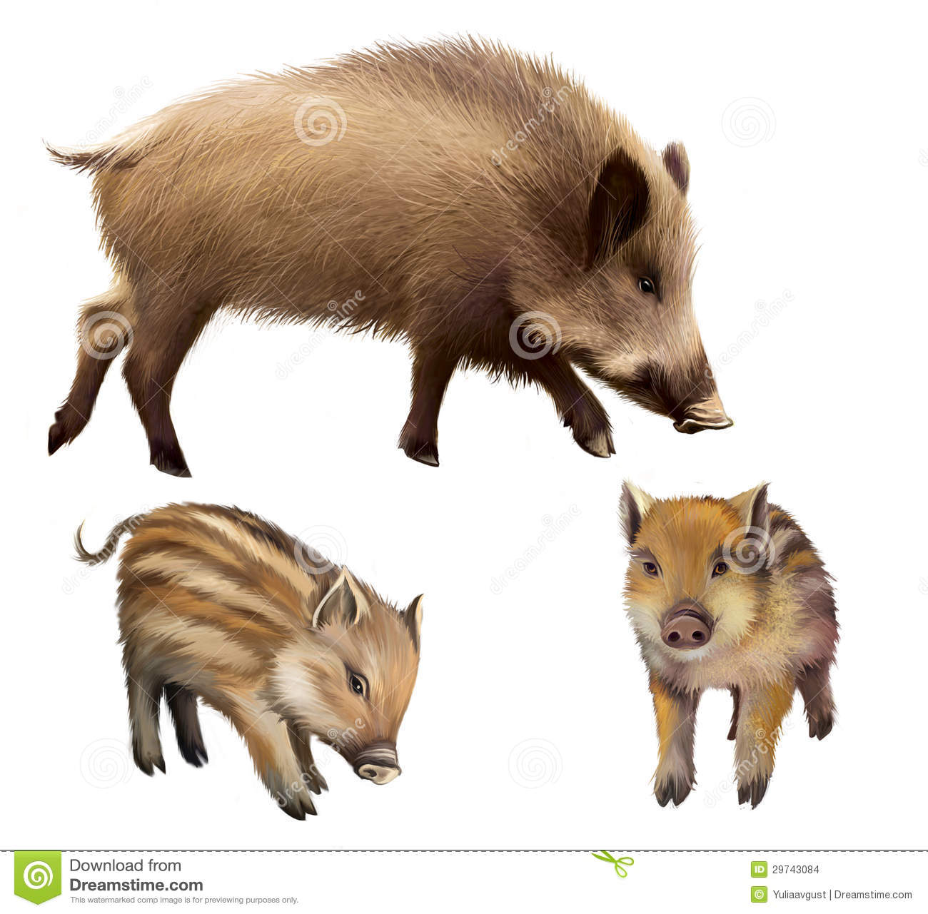 Boar familly, two little piglets and mother pig. Isolated realistic illustration on white background