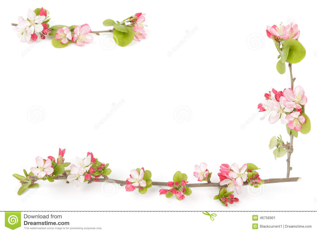 boarder of crabapple flowers stock image image of white bloom
