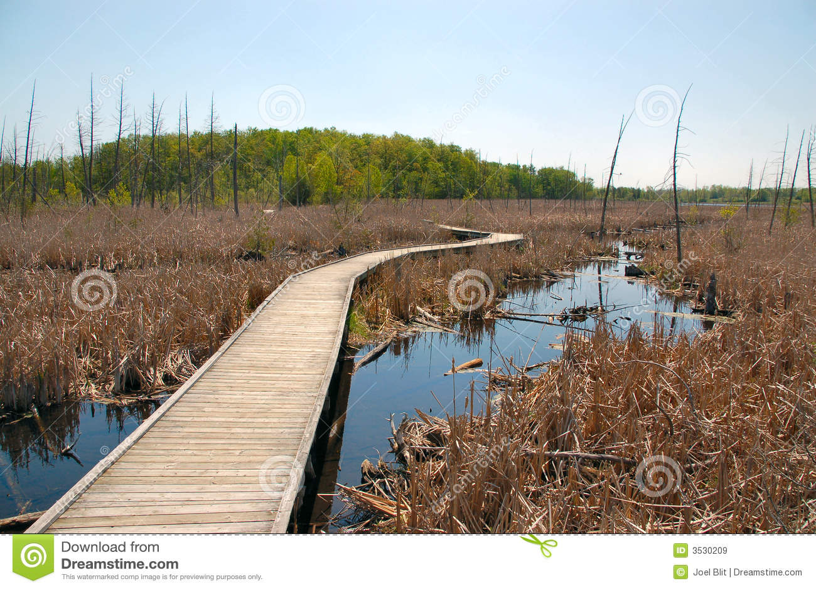 Boardwalk över våtmarker