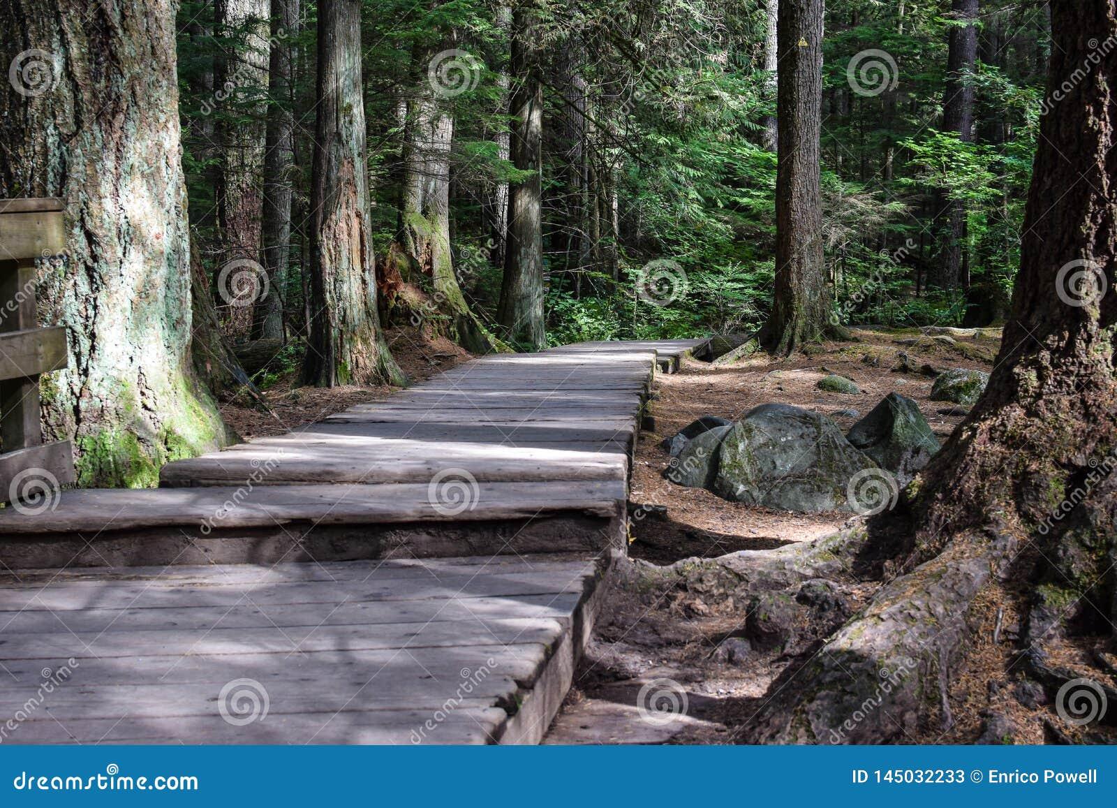 Boardwalk pathway between moss covered trees
