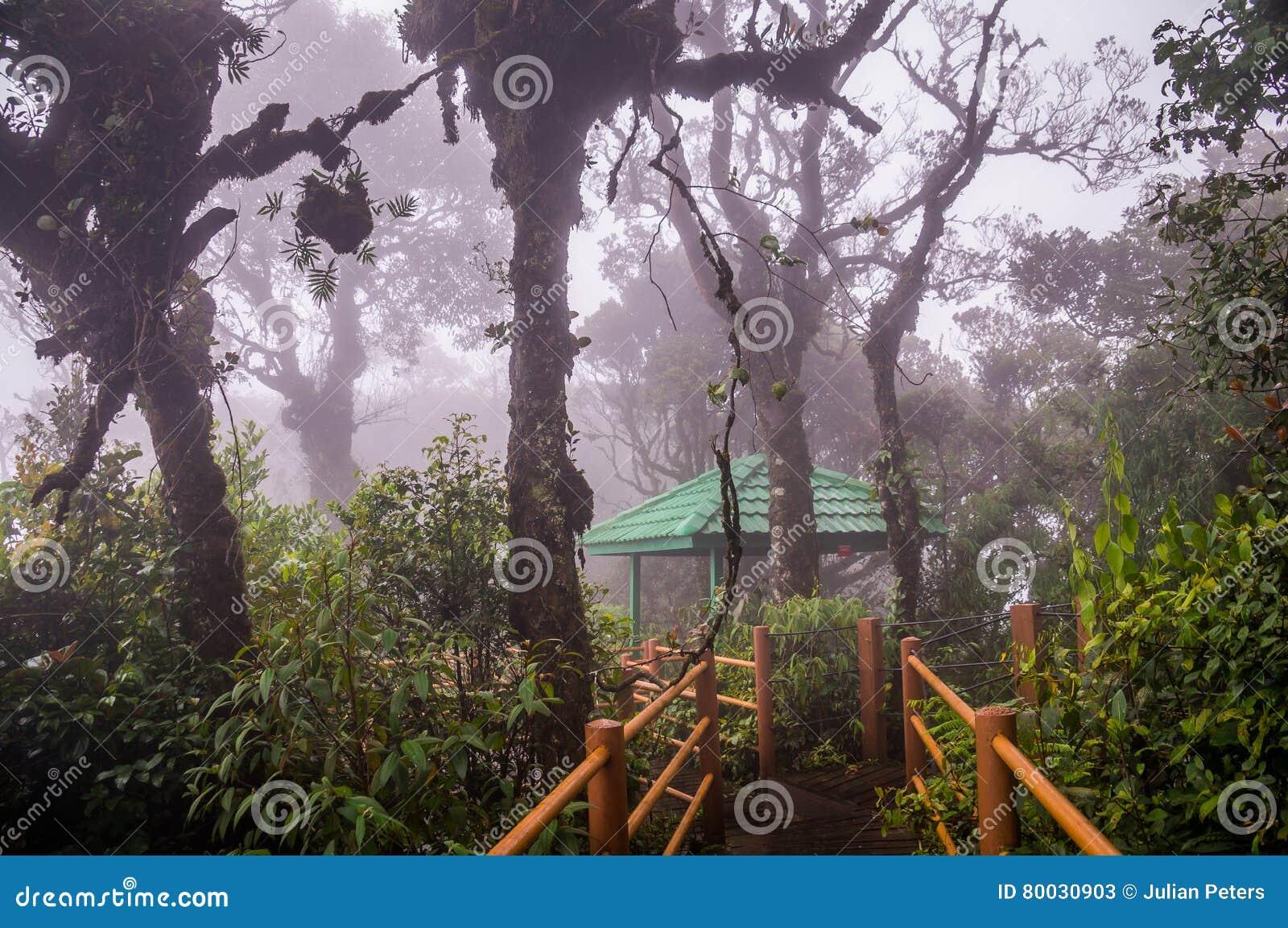 Boardwalk przez mglistego Mechatego lasu w Cameron średniogórzach