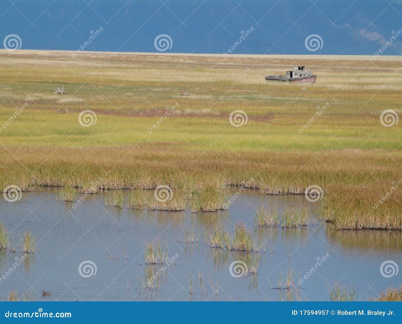 Boat on marsh or wetland