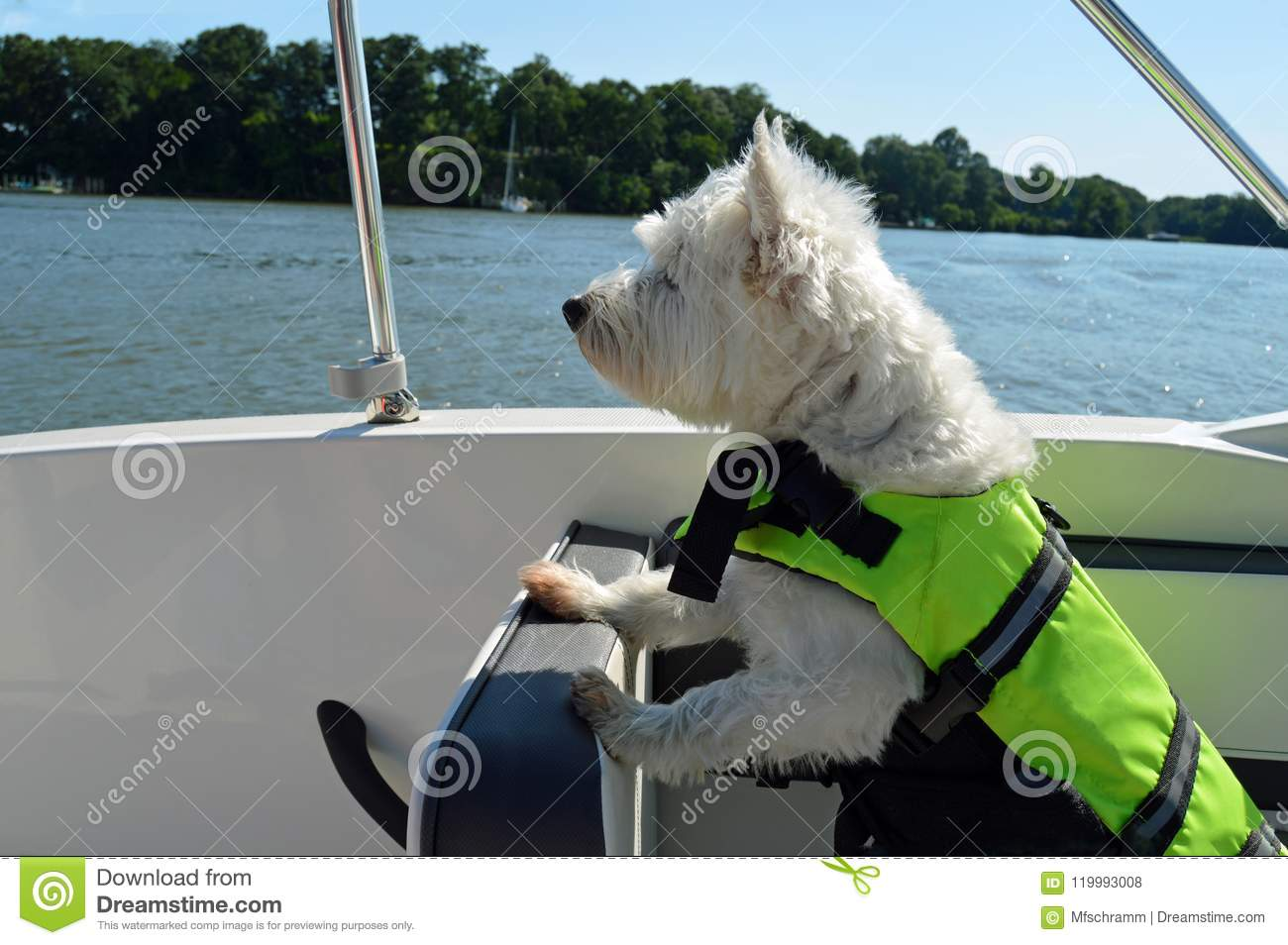 Boating Dog