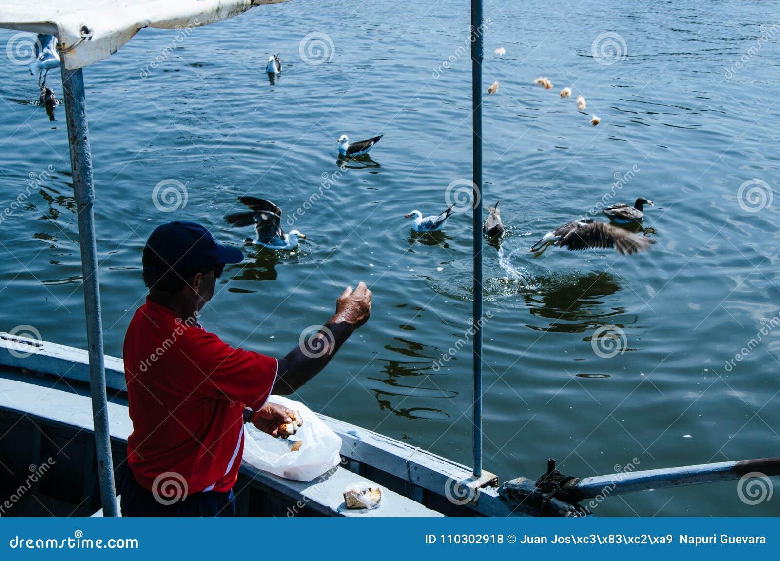 Boatman en zeemeeuwen