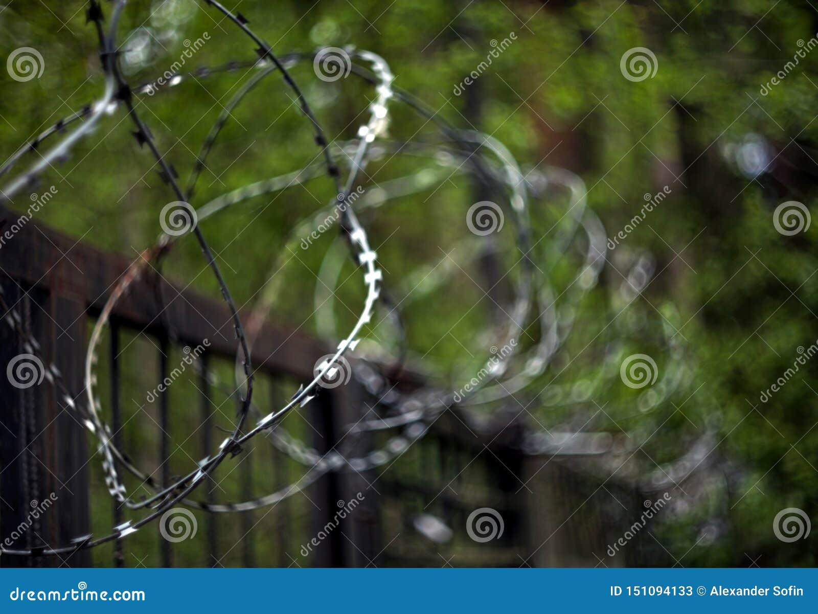 Bobinas do arame farpado em uma cerca do metal com um fundo borrado das folhas verdes das árvores