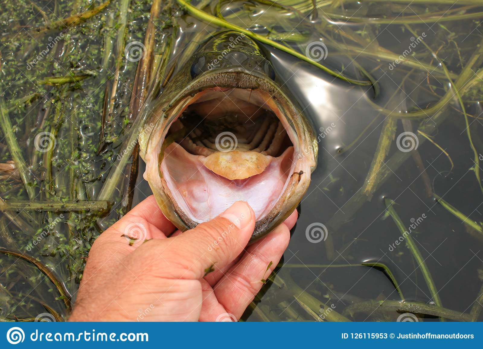 Boca Bass While Fishing dos bordos do homem grande