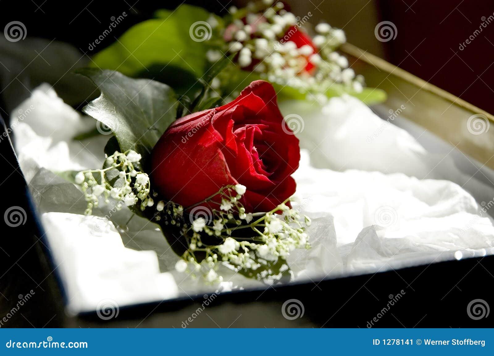 Boda Rose