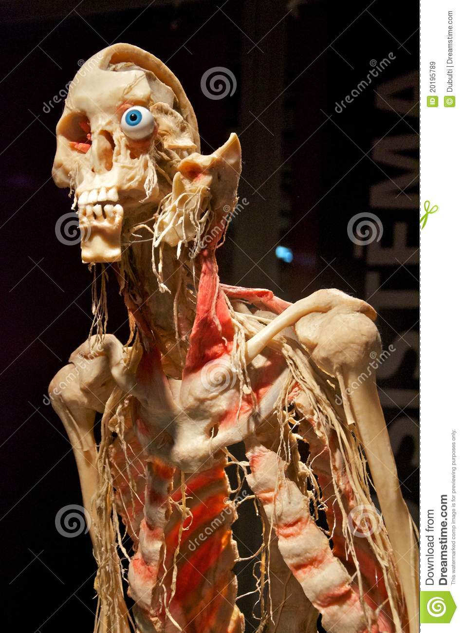 Bodies Revealed Exhibition Of Human Dead Bodies Editorial Stock ...