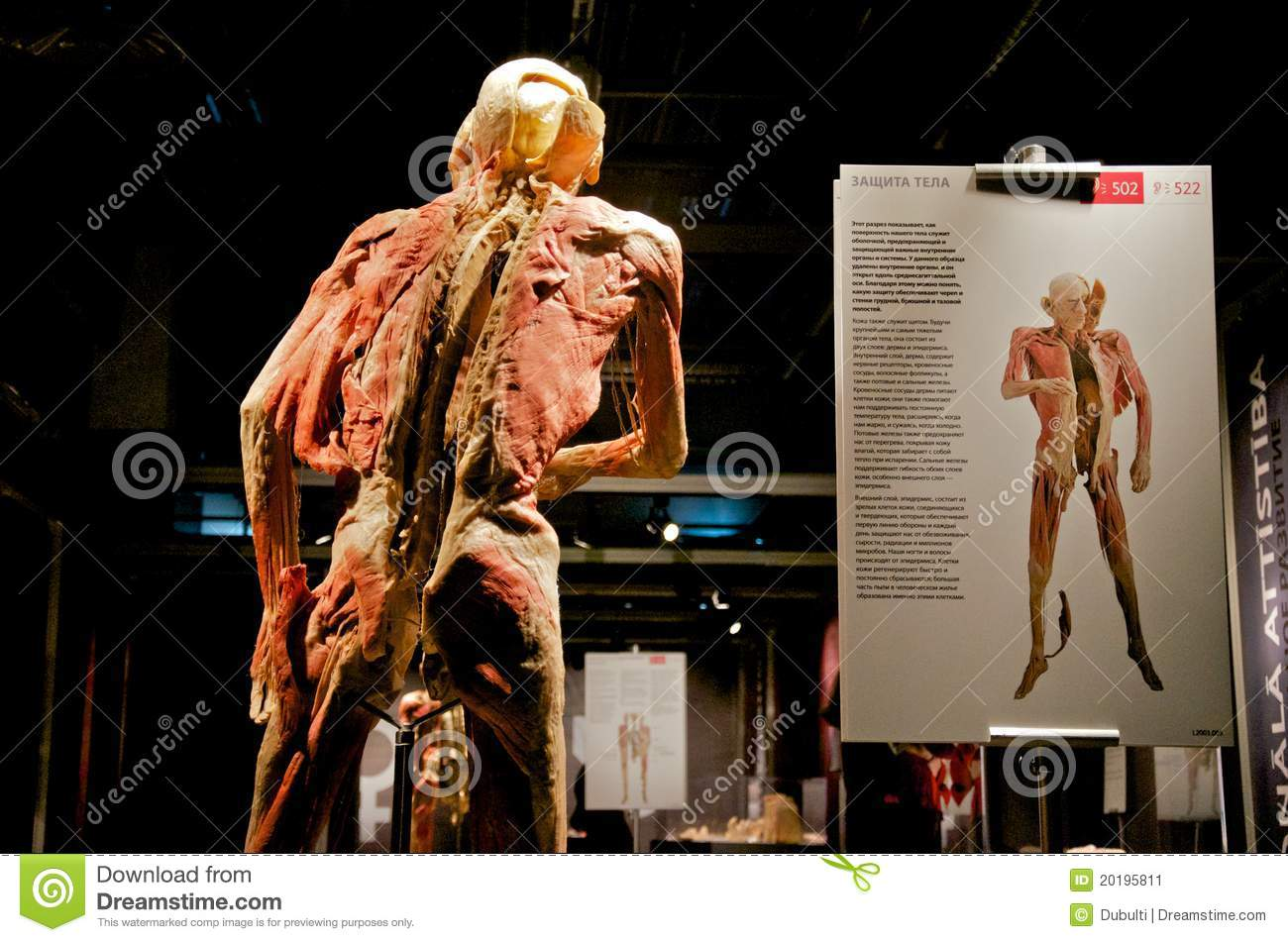 Bodies Revealed Exhibition Of Human Dead Bodies Editorial Photo ...