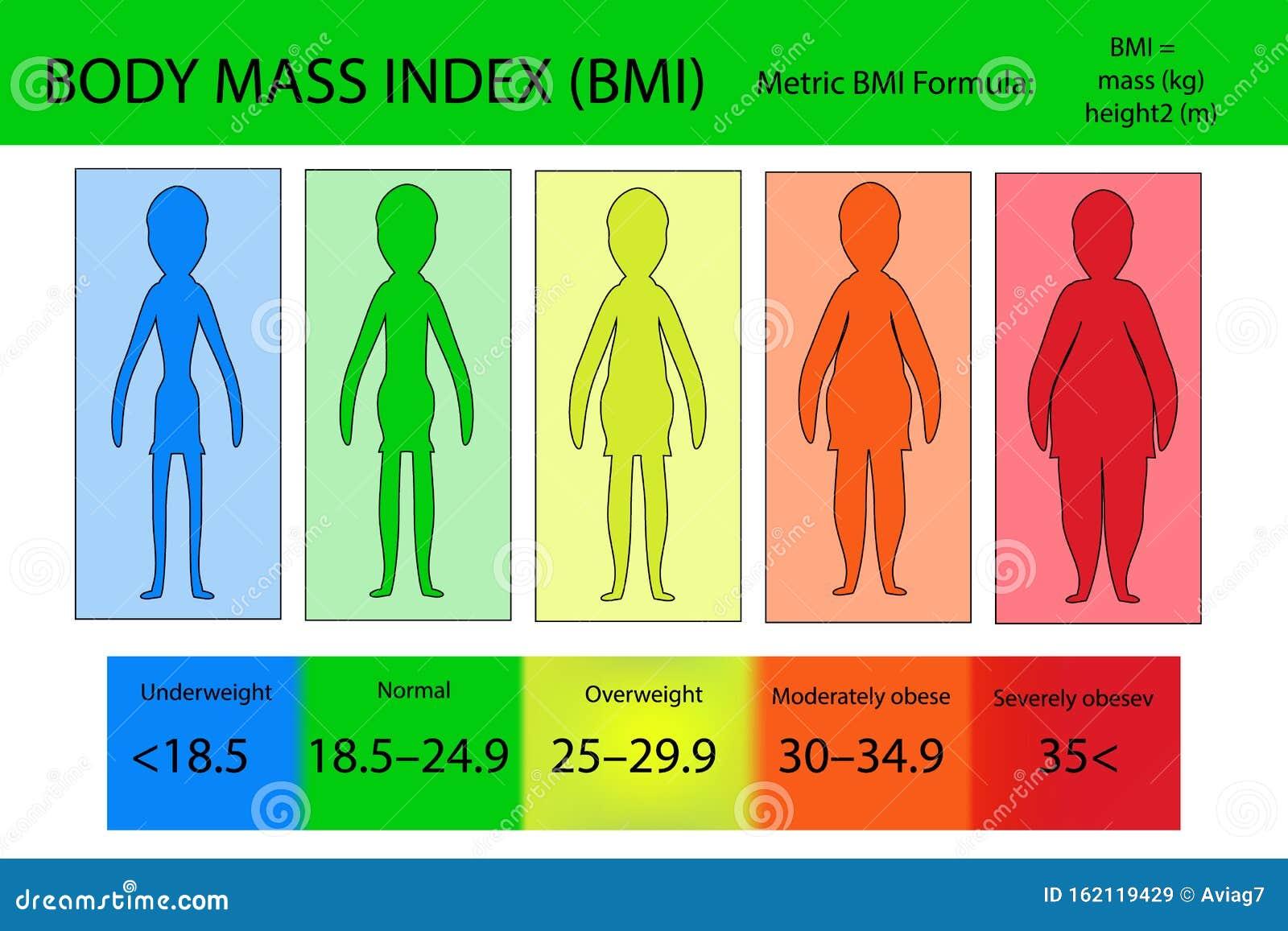 Body Mass Index Vektor Von Untergewicht Bis Extrem Fettleibig ...