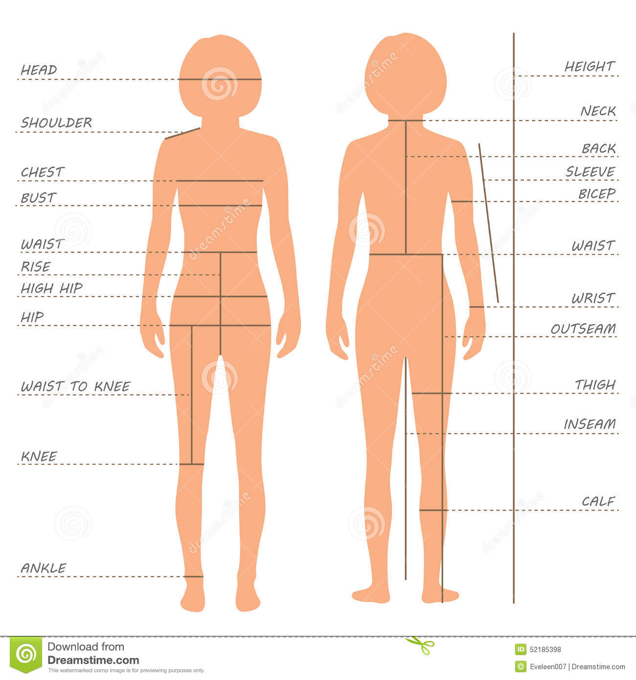 Body Measurements Size Chart Stock Vector Image 52185398