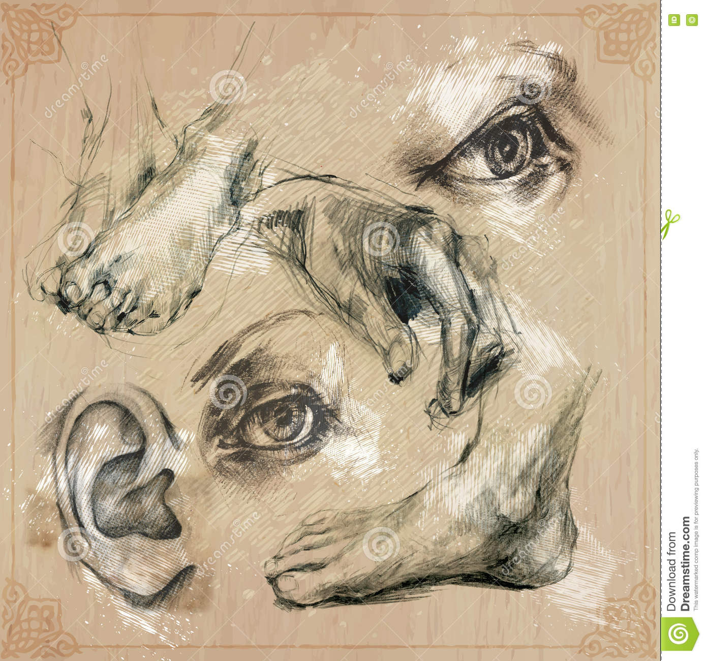 An hand drawn illustrations human body parts eye leg hand ear pencil technique converted into vector pack collection of an hand drawn illustrations