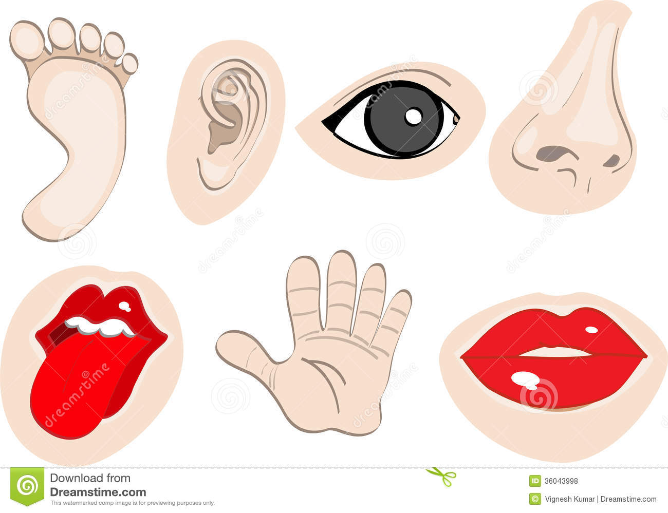 Body Parts set 2 stock illustration. Illustration of ...