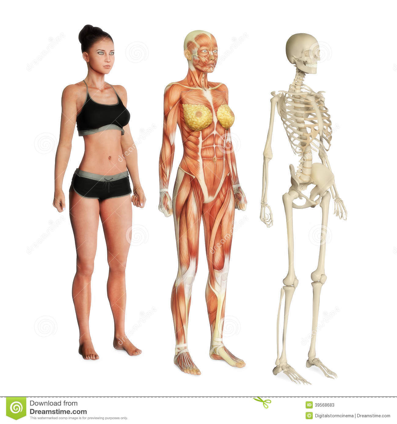 Body Systems Stock Illustration Illustration Of Education 39568683