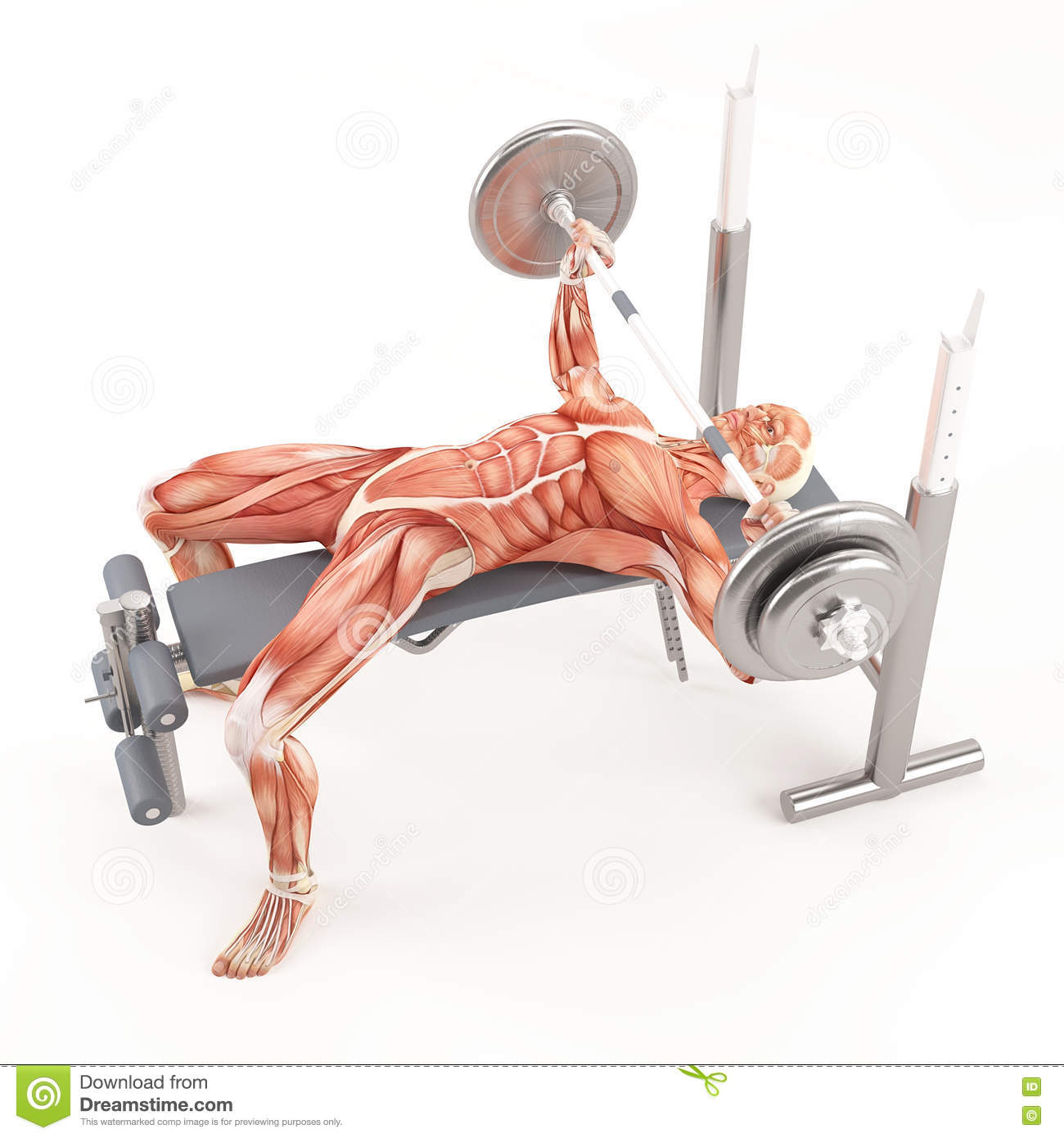 Muscles Used For Bench Press 28 Images Discover The Ultimate 5 Workout That Will Get You