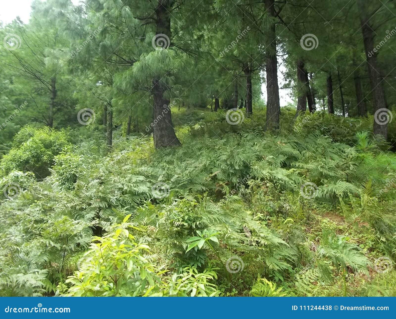 Boeiende natuurlijke scène van Sudhnoti Kashmir