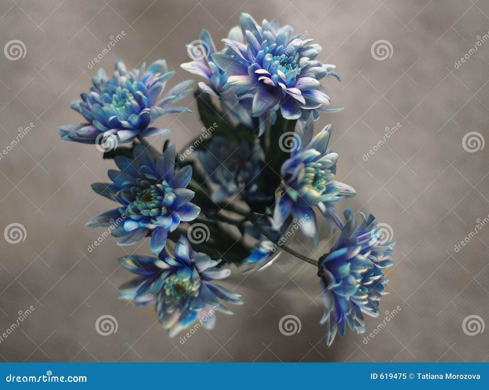 Boeket van donkerblauwe kleuren