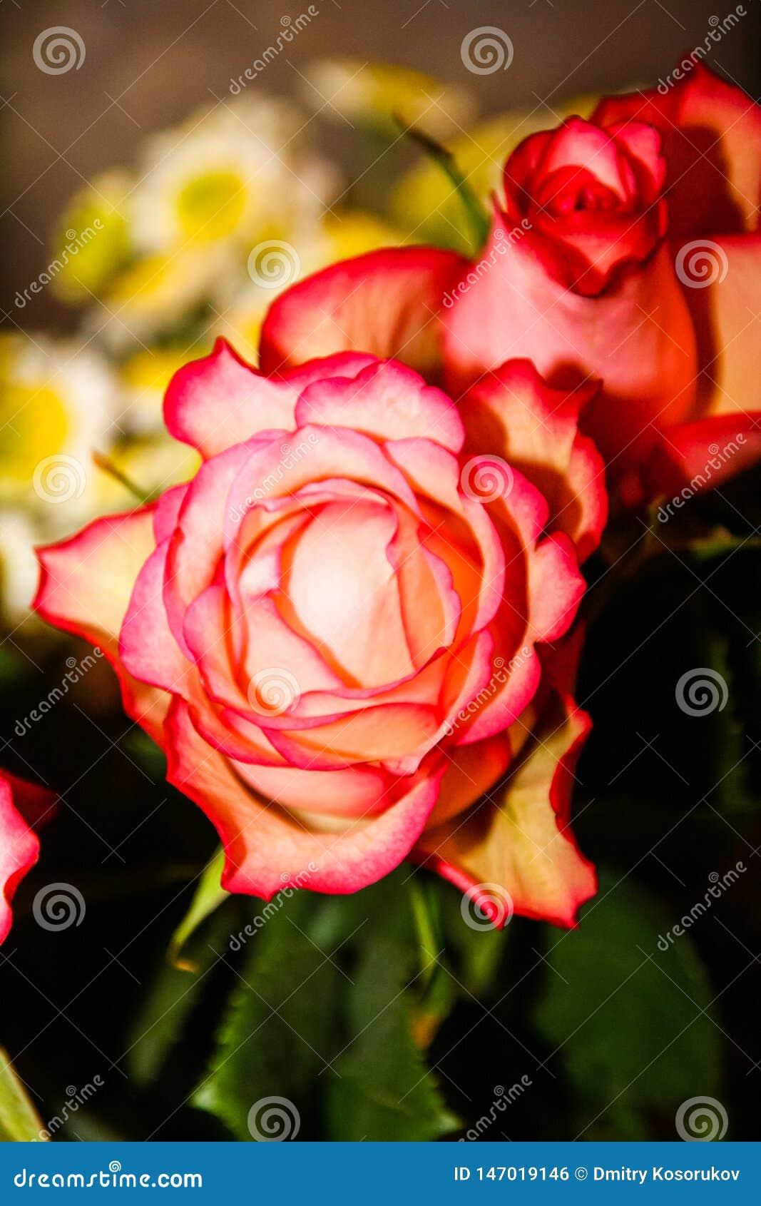 Boeket van donkere roze rozen