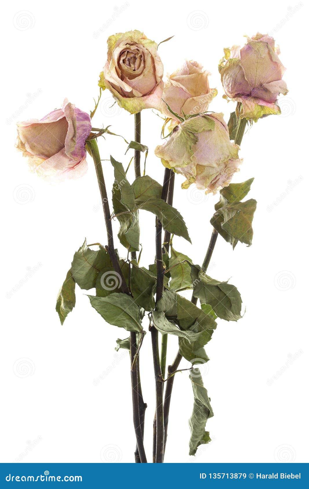 Boeket van droge rozen