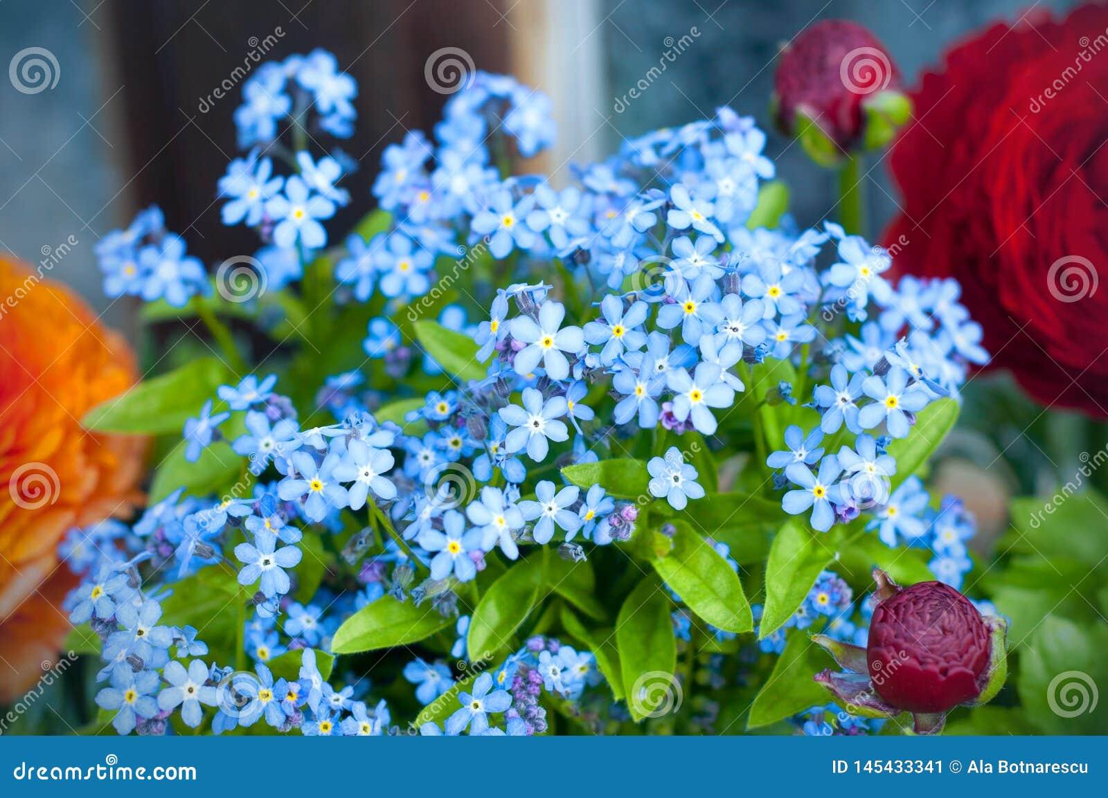 Boeket van Forget me niet en Perzische boterbloemenflowersranunculus