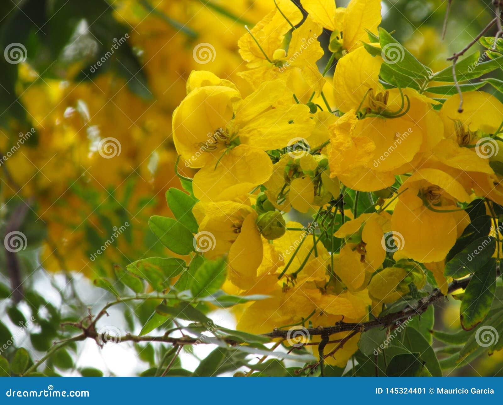 Boeket van Gele Bloemen in een Boom