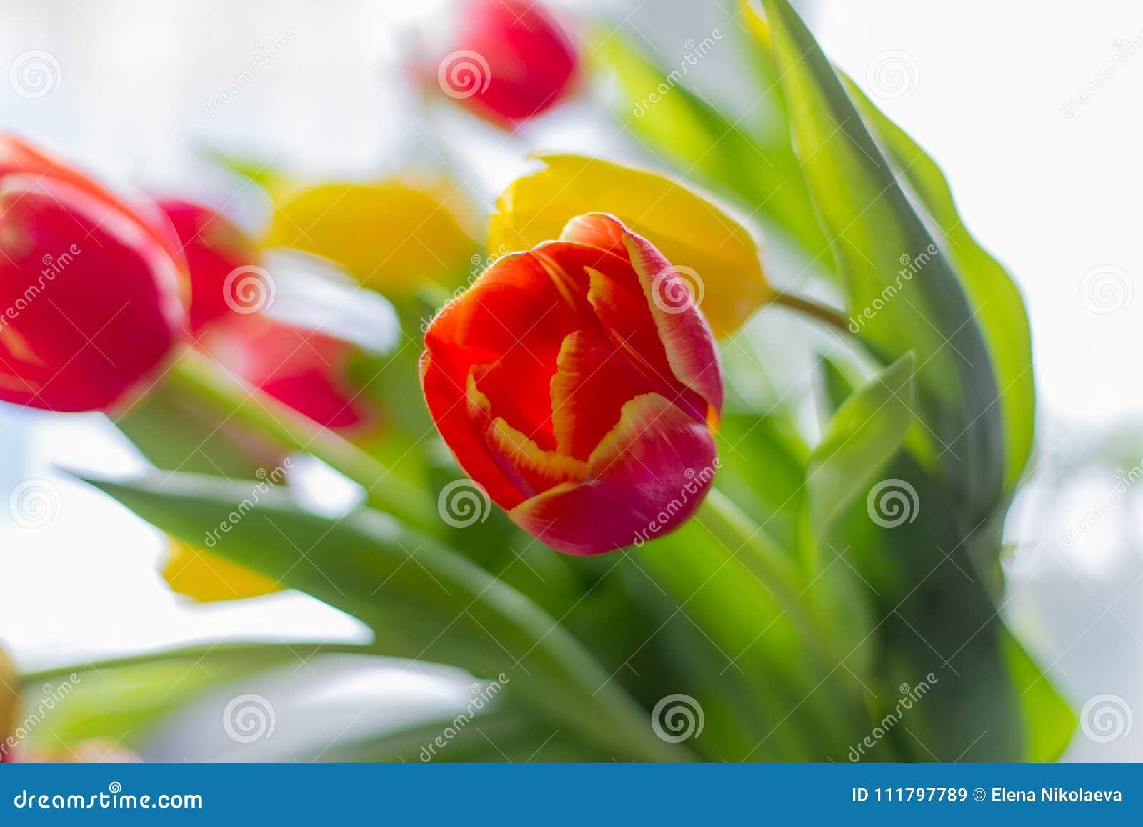 Boeket van multicolored tulpen op een grijze achtergrond