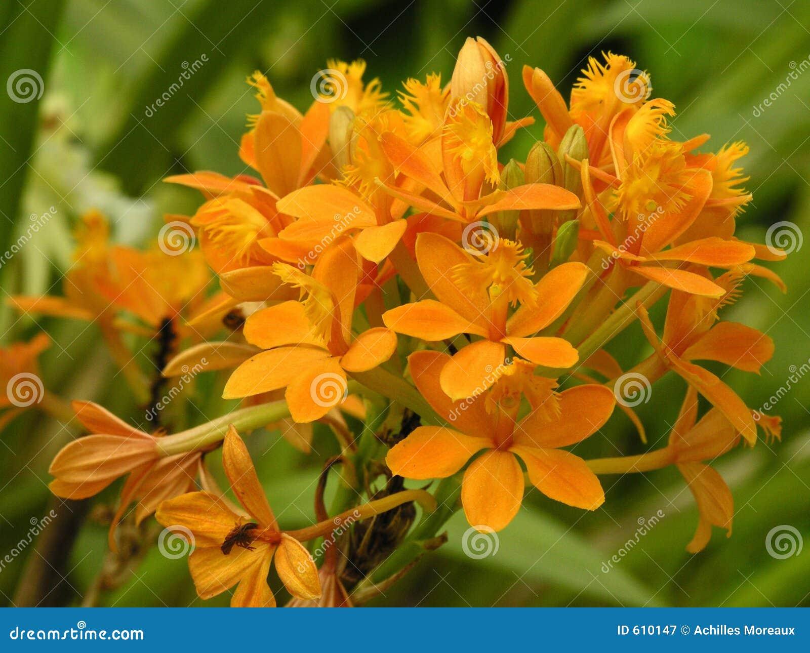 Boeket van oranje bloemen