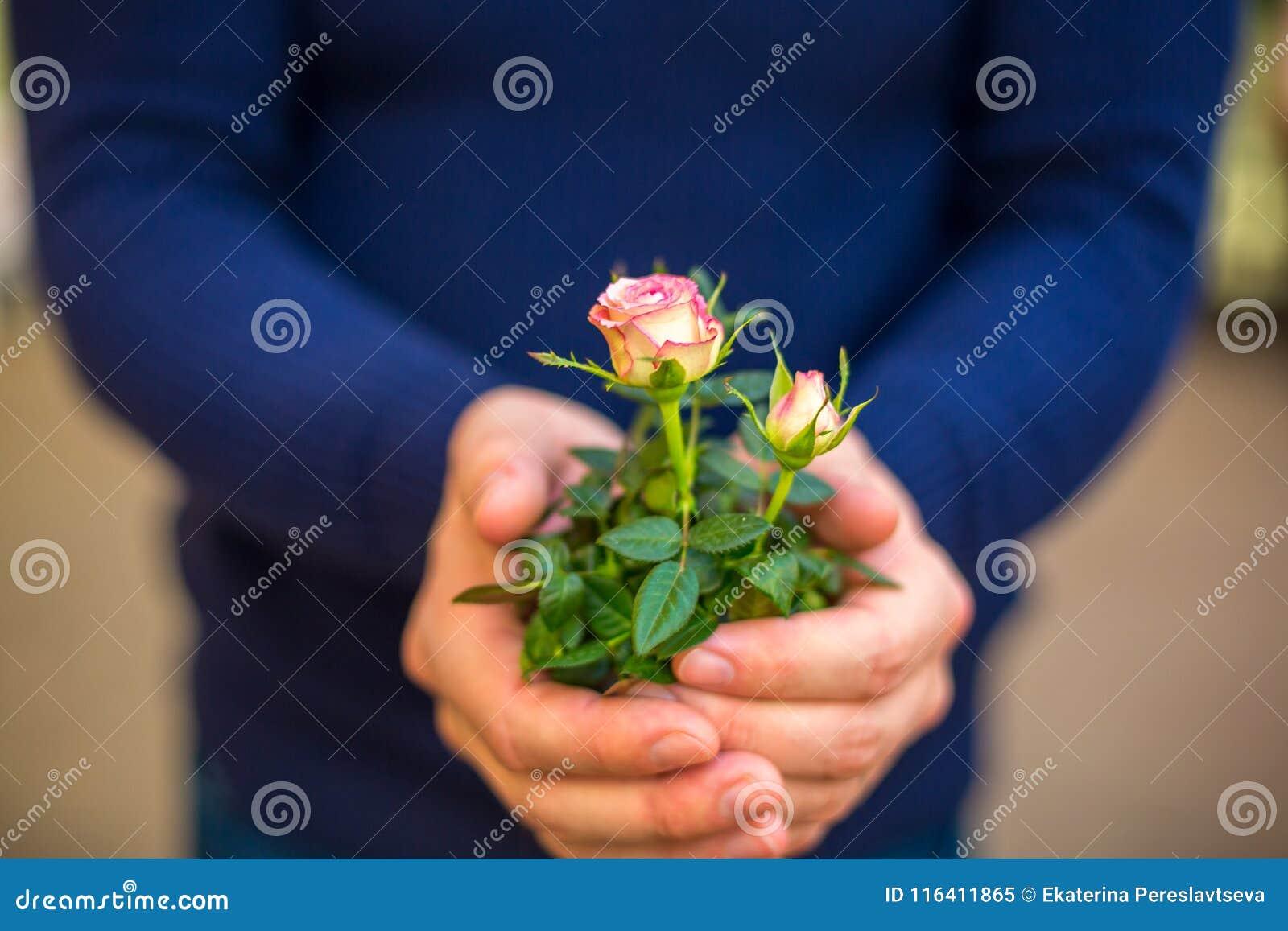 Boeket van rozen in de handen van een mensenclose-up